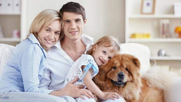 Wills & Trusts dog-young-family Direct Wills Holders Hill